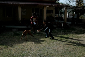 Whee! - Pavan tries to pull a fast one on Lali, the boxer terrier